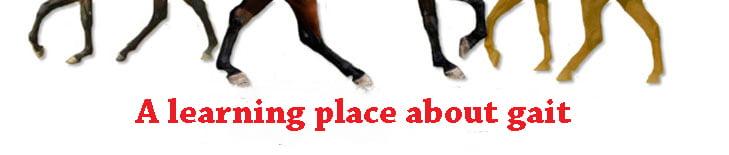 jellico morgan horses logo